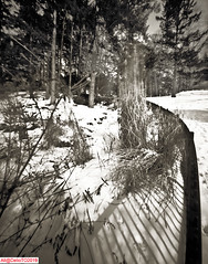 Winter Grass and fence (DelioTO) Tags: 4x5 blackwhite canada city cliff d23 f250 fomapan100 lake landscape ontario pinhole snow toned trails winter woods