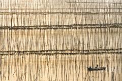 Xiapu, Fujian    福建霞浦 (Jennifer 真泥佛 * Taiwan) Tags: 海帶 海帶採收 霞浦 福建 中國 船 夕陽 xiapufujian china xiapu 福建省 sonya7r2