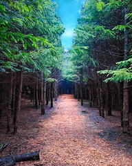 Ace (VisionPerk) Tags: discgolf buxton woods oregon vernonia disc golf frolf basket hdr traveloregon portland