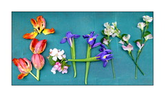 My name is...spelling it with flowers💐 (John (Thank you for >2 million views)) Tags: smileonsaturday mynameis tulips appleblossom iris flora flowers spelling catchycolours