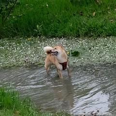 Dog (theq629) Tags: animal dog taipei taiwan daan daanforestpark