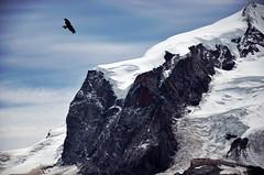 Monte Rosa - Zermatt (Massimo Frasson) Tags: kodak kodakelitechromeextracolor svizzera suisse schweiz switzerland confederazionesvizzera confederazioneelvetica cantonvallese distrettodivisp zermatt ferroviadelgornergrat gornergratbahn monterosa ghiacciaio montagna monti neve vette cielo roccia uccello