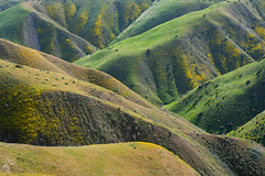 Criss Cross (Bob Bowman Photography) Tags: spring hills lines flowers green california light shadow landscape nikon rrs