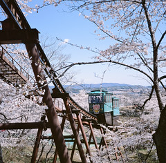 0924-11 (karl0513) Tags: film filmphotography filmisnotdead sakura japan 120film mamiya6mf