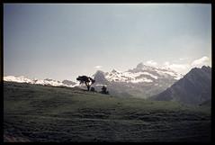 Alpe Metzan (Alberto Cameroni) Tags: testagrigia groabhopt cyberviewxv51425 rothorn montepinter valledaosta valdayas alpemetzan diapositiva agfa pellicola analogica nikkormat