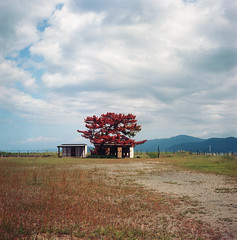 Mihama (Vinzent M) Tags: fukui 福井県 japan zniv tlr rollei rolleiflex 35 zeiss planar 日本 kansai 関西 ektar kodak 美浜