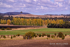 A dash of autumn yellow in New South Wales (Dan Wiklund) Tags: nsw newsouthwales autumn landscape nature fields sunny 2018 d800