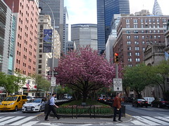 201904115 New York City Murray Hill (taigatrommelchen) Tags: 20190417 usa ny newyork newyorkcity nyc manhattan murrayhill icon urban city street blossoms