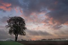 Frühlingserwachen (markusgeisse) Tags: wolken clouds sunrise baum landschaft landscape morgen sonnenaufgang goldene stunde nature sunset tree light sun sky outside spring orange