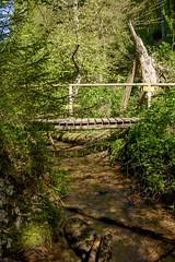the Bridge (tucsontec) Tags: brücke holzbrücke bridge wasser wald wasserlauf wandern bäume baum bach trekking trees woods forest nature natur nationalpark rheinlandpfalz