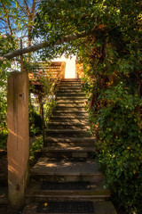 Stairway to heaven (FocusPocus Photography) Tags: treppe stufen stairs stairway pflanze plant besigheim blätter leaves