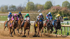 Tension in the air, rumble on the ground (sniggie) Tags: fayettecounty keeneland keenelandracetrack kentucky horse horserace thoroughbredhorse thoroughbredracing