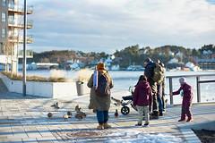 Feeding the Ducks (Sten Arne Andersen) Tags: ender mate barbu park leicam9p noctilux 2019 pollen kanalplassen arendalby 2018 viner januar