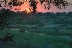 Classic African Sunset (canongirl2009) Tags: sunset krugernationalpark crocodileriver river elephants southafrica nikon d3000