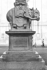 Elefante de Bernini (José M. Arboleda) Tags: arquitectura arte escultura elefante bernini obelisco piazzadellaminerva roma italia canon eos 5d markiii ef1740mmf4lusm josémarboledac