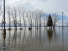 A photo of the Ottawa River's spring thaw flood overwhelming the marina in Aylmer (Gatineau), Quebec (Ullysses) Tags: aylmermarina aylmer gatineau quebec canada spring printemps springthaw flood flooding inondation reflectionsonwater ottawariver rivièredesoutaouais