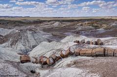 Petrified Landscape (walkerross42) Tags: petrified wood logs rock quartz landscape petrifiedforest nationalpark arizona erosion desert painteddesert
