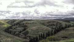 The Hills of Walla Walla County (Mr.LeeCP) Tags: hills trees evergreens clouds washington