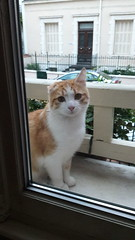 Filou le chat (Norman555) Tags: artistique art animal cat chat rue regard expression yeux urban photo photography photographie photographe photos street samsung streetlevelphoto streetphotography streetphoto streetphotographer flickr animals animais animales animali norman nimals europe photographer juanlespins beautiful beauty beau blanc 06 color couleurs gatto gato katze kato kot pusi neko macska tiere dieren