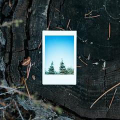 34.100 (tara on the wander) Tags: instantfilm image34100 tarainstapix 100x2019 100xthe2019edition