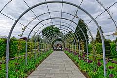 Wisteria Arch (Croydon Clicker) Tags: arch tunnel wisteria garden footpath fountain people flowers trees sky cloud rhs wisley surrey