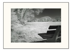 Landscape beauty - infrared 04 (Fr@ηk ) Tags: landscapebeautyinfrared03 dsc181900604def infrared infrarood zww blackandwhite monochrome limburg landscape nature beauty relax enjoy mrtungsten62 frnk couch seat sit europe sonydscv1 nd32 ir interesting dream foliage chlorophyl leafs trees shrubs meadow grass farmers agriculture