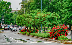 2019.05.04 Vermont Avenue Garden Blooms and Work Party, Washington, DC USA 01937