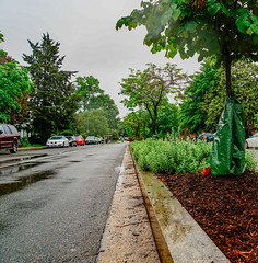 2019.05.04 Vermont Avenue Garden Blooms and Work Party, Washington, DC USA 01988