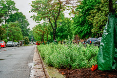 2019.05.04 Vermont Avenue Garden Blooms and Work Party, Washington, DC USA 01989