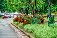 2019.05.04 Vermont Avenue Garden Blooms and Work Party, Washington, DC USA 01991