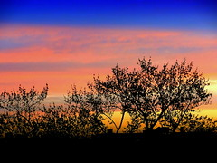 New York Sunset (dimaruss34) Tags: newyork brooklyn dmitriyfomenko image sky skyline clouds trees sunset