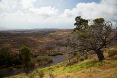 Kohala, Hawaii (Big Island) (Roger Gerbig) Tags: kohala hawaii bigisland island rogergerbig canoneos5dmarkii canonef24105mmf4lisusm 3234