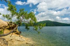 Bonsai tree (agasfer) Tags: 2019 southcarolina oconee county devilsforkstatepark lake jocassee sony a6000 sonye3556pz1650oss sky clouds mountains appalachia