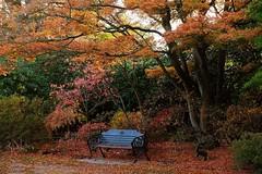 Seat in autumn (Maureen Pierre) Tags: seat autumn leaves christchurch monavale garden