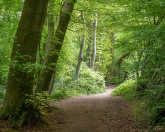 (Mr Aylesbury) Tags: spring landscape nature sony woodland countryside buckinghamshire tree uk forest sonya7iii trees england bucks fe24240mmf3563oss karlvaughan 2019