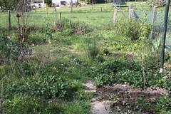 My garden (XXXV) (dididumm) Tags: mess messy chaos garden seventhyear earlyspring leftovers reste vorfrühling siebtesjahr garten unordentlich durcheinander chaotisch unordnung