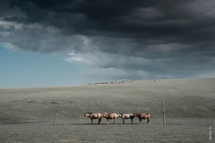 Rain cloud... (N.Batkhurel) Tags: season clouds animals horse sheep landscape summer sky ngc nikon nikondf natur nikkor 24120mm övörkhangai mongolia mountian