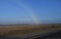 Fog rainbow (Arvo Poolar) Tags: outdoors ontario canada arvopoolar nature naturallight natural nikond500 naturephotography foggy rainbow