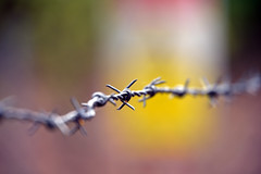 Henley Park Pirbright 6 May 2019 012 (paul_appleyard) Tags: fence flickrfriday henleypark surrey pirbright may 2019 barbed wire sharp dof