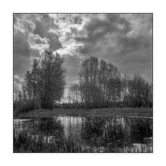 Lake reflections (K.Pihl) Tags: trees rolleiflex35e orangefilter reflections monochrome film rodinal1100 planar75mmrolleiflex standdevelopment blackwhite schwarzweiss bw pellicolaanalogica analog clouds