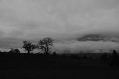 vena d'oro (davidero) Tags: vena oro belluno bn bw landscape paesaggio nuvole nuages nubes clouds montagna mountain alberi trees arboles arbres campo field champ