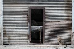 Gato (FX-1988) Tags: havana gato cat animal animals city urban facade gate metal old central rust street door cuba katt