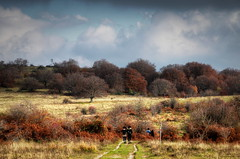 Elcito #10 (Strocchi) Tags: elcito macerata alberi trees marche canon eos6d 24105mm walking trekking hiking path hdr