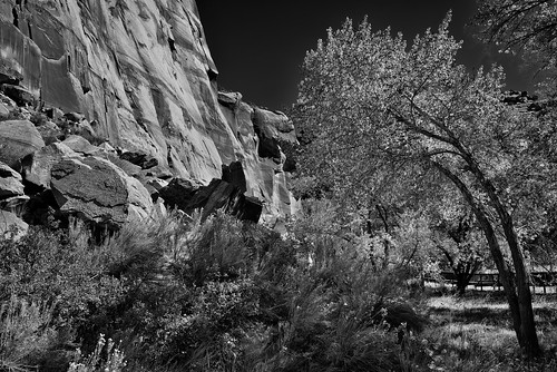 Greens and Yellows and a Backdrop of Blues and Reds (Black & White, Capitol Reef National Park)
