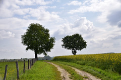 Chemin campagnard (Croc'odile67) Tags: nikon d3300 sigma contemporary 18200dcoshsmc paysage landscape champ chemin arbres trees ciel cloud sky nature nuage colza campagne