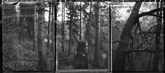 N. (denzzz) Tags: portrait polaroid polaroid55 expired triptych blackwhite blackandwhite analogphotography filmphotography instantphotography largeformat 4x5 skancheli schneidersupersymmar120mmf56hm