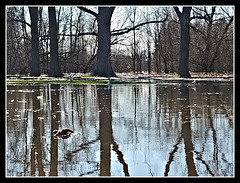Great Reflections (bigbrowneyez) Tags: trees reflections water park parkinglot light shadows dof sky greatreflections amazing shocking surprise nature natura ottawa canada desperate fresh new flooding acua alberi cielo bruto male disaster