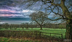 Calming Layby (OATH Photography by Alison Richards) Tags: tree wood bark leaves hedge grass green sky clouds blue farming farmland rural agriculture fence topazstudio topazlabs texture ashbydelazouch englandunitedkingdom