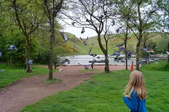 A7 2019 05 07 (Sibokk) Tags: a7 anna beasts bird camera digital fullframe photography sony edinburgh scotland uk