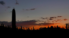P1040338 (72grande) Tags: arizona az phoenix desertbotanicalgarden